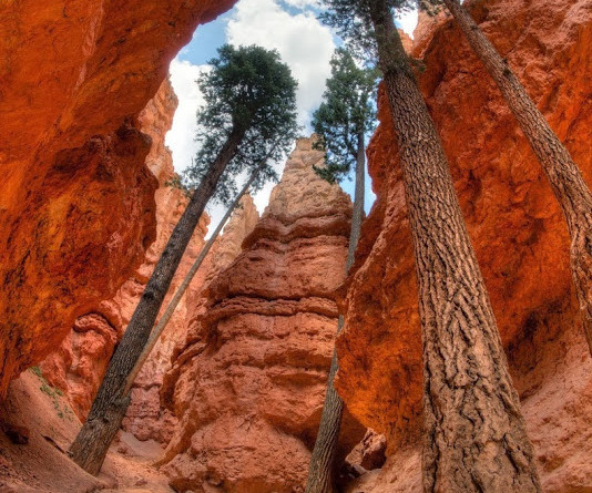 A Canyon Where You Can See The Most Gigantic Pines