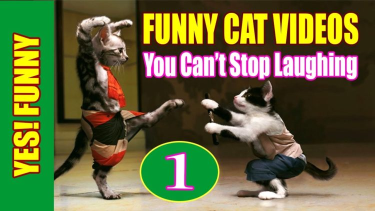 Funny Cat Videos 2016 – You Can't Stop Laughing [Part 1]