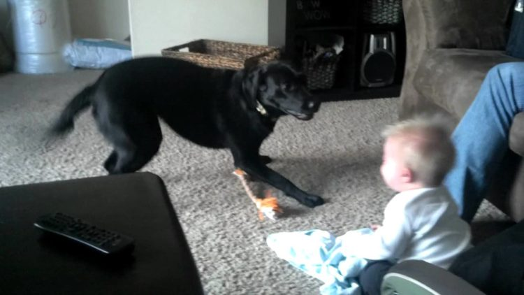 Baby laughing hysterically at dog