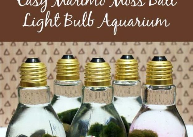41 Easiest DIY Projects Ever – Easy Marimo Moss Ball DIY Light Bulb Aquarium – E…